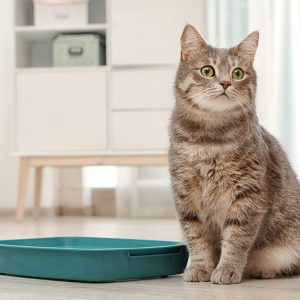 Ever-Clean-Clumping-Cat-Litter-Cat-Care-Love-Your-Litter-Tray-Article-Image-1430x1467px-1-800x800-c-default